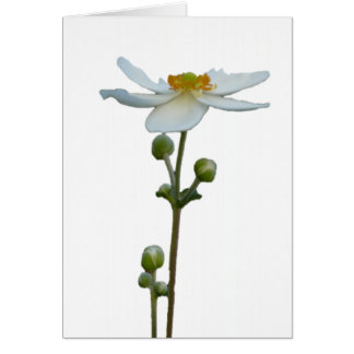 Anémone blanche 1 carte de vœux