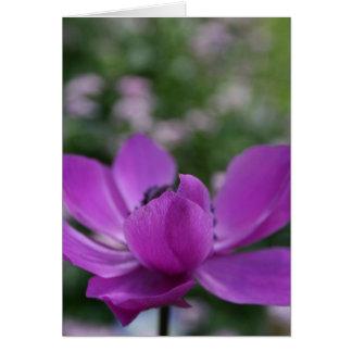 Anémone douce carte de vœux