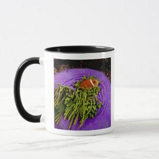 Anemonefish et grande anémone tasse