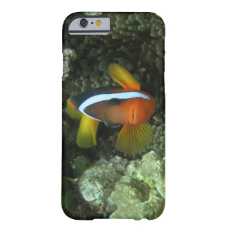 Anemonefish noir (melanopus d'Amphiprion) dedans Coque iPhone 6 Barely There