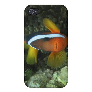 Anemonefish noir (melanopus d'Amphiprion) dedans Coques iPhone 4