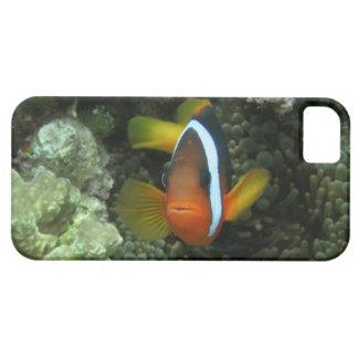 Anemonefish noir (melanopus d'Amphiprion) dedans Coques iPhone 5
