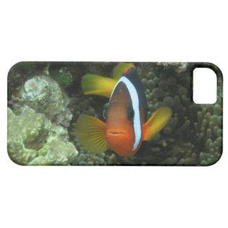 Anemonefish noir (melanopus d'Amphiprion) dedans iPhone 5 Case