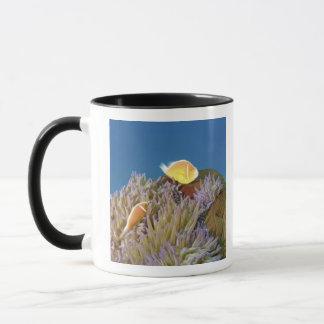 Anemonefish rose (perideraion d'Amphiprion) dedans Mugs