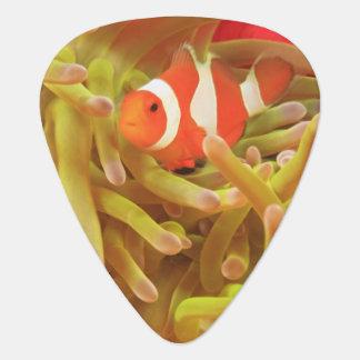 anemonefish sur l'actinie Pacifique d'indo géant, Onglet De Guitare