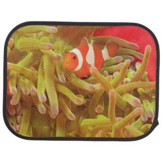 anemonefish sur l'actinie Pacifique d'indo géant, Tapis De Sol