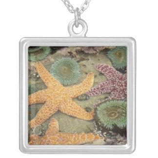 Anémones vertes géantes et étoiles de mer ocres pendentif carré