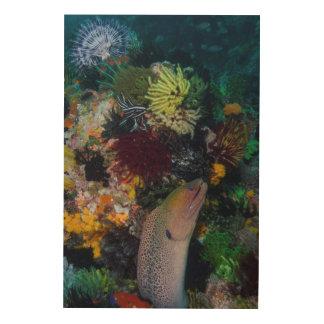Anguille et corail de Moray Impression Sur Bois