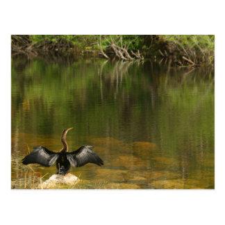 Anhinga dans les marais - carte de visite