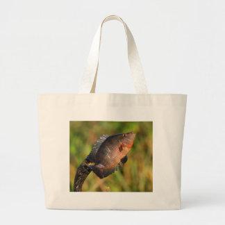 Anhinga et poissons sac