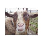 Animal de ferme de basse-cour de chèvre de Billy Toiles Tendues