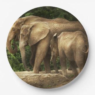 Animal - éléphant - famille serrée de knit assiettes en papier