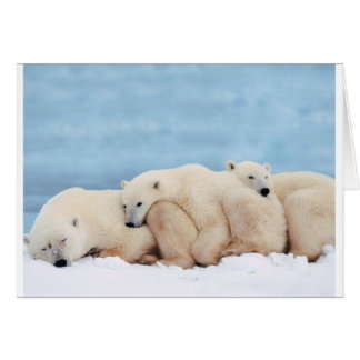 animal-polaire-ours cartes
