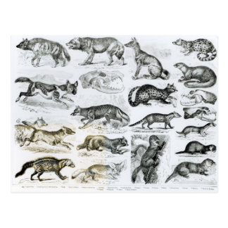 Animaux carnivores carte postale