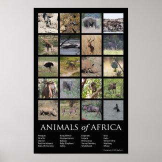 Animaux de l'Afrique Affiche