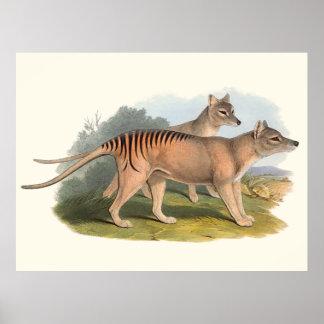 Animaux de l'Australie le tigre tasmanien Poster