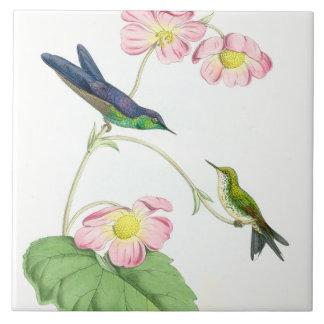 Animaux floraux de faune de fleurs d'oiseaux de carreau