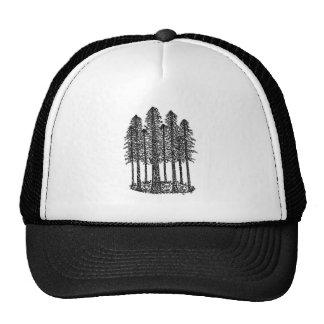 Anneau de cathédrale (croquis côtier de séquoias) casquettes