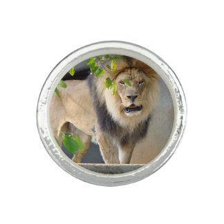 Anneau de faune de lion bagues