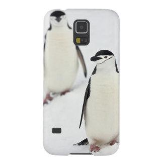 Antarcticus de Pygoscelis de pingouins de Coque Galaxy S5