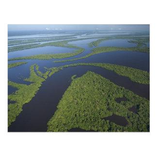 Antenne d'archipel d'Anavilhanas, inondée Carte Postale