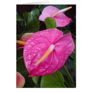 Anthures roses carte de vœux