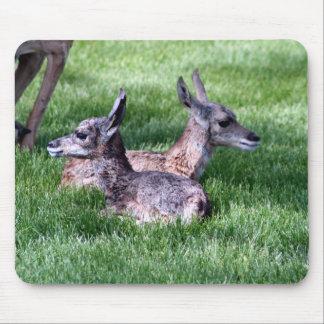 Antilope de bébé tapis de souris