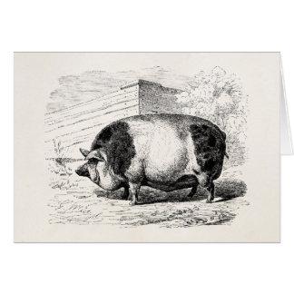 Antiquité de porcs de porcs de porc repérée par cartes