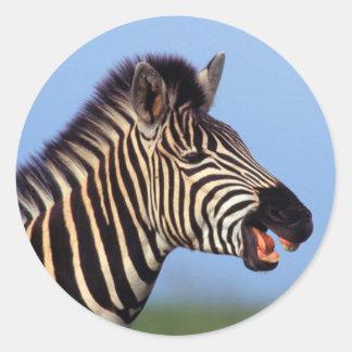 Appeler de zèbre de plaines (Quagga d'Equus) Sticker Rond