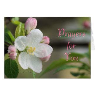 Apple fleurissent occasion de carte de prière