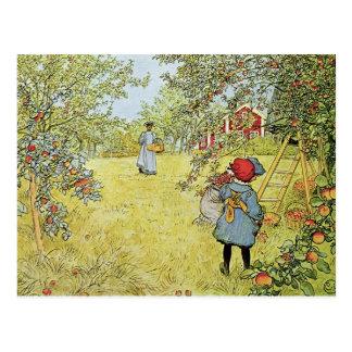 Apple moissonnent cartes postales