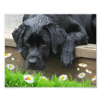 Appréciez les petites choses - Labrador noir Photographies D'art