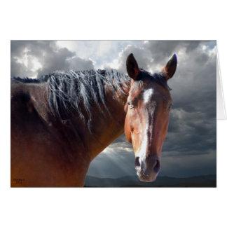 Appui de sympathie et confort - amant de cheval cartes