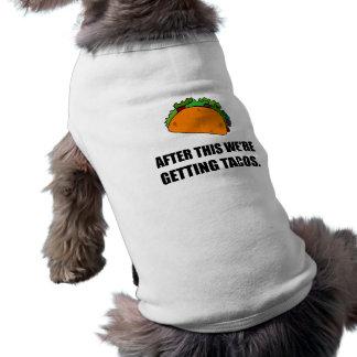 Après ceci obtenant des tacos t-shirt pour chien