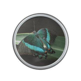 Aqua et papillon noir haut-parleur