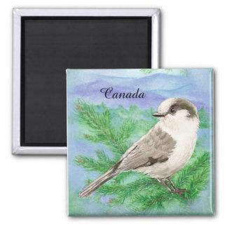 Aquarelle grise, gris ou coutume d'oiseau de geai aimant