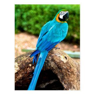 Ara vert et jaune, carte postale du Trinidad