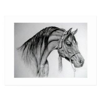 Arabe Ian de cheval Carte Postale