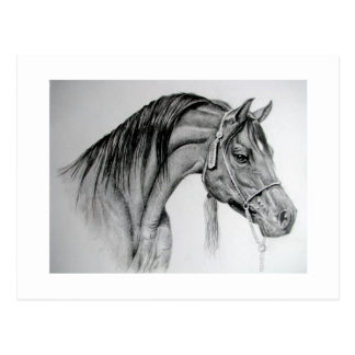 Arabe Ian de cheval Cartes Postales
