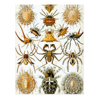 Arachnides de Haeckel Carte Postale