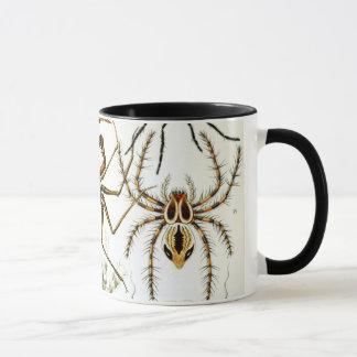 Arachnides par Ernst Haeckel, araignées vintages Tasses