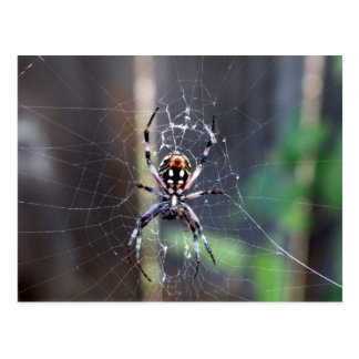 araignée carte postale