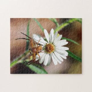 Araignée de crabe de Brown sur le puzzle de fleur