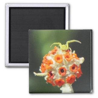 Araignée de crabe enragé sur la fleur aimant