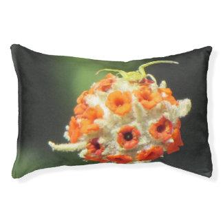 Araignée de crabe enragé sur la fleur lit pour chien