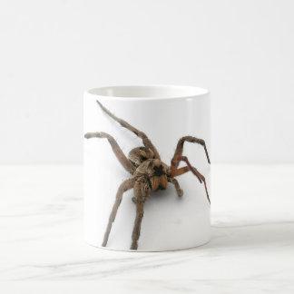 araignée mug