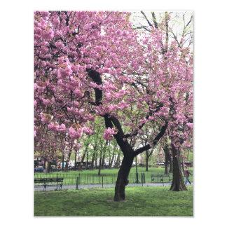 Arbre assez rose NYC New York City de fleurs de Photographies D'art