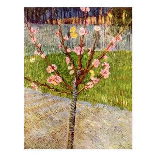 Arbre d'amande dans la fleur par Vincent van Gogh Carte Postale