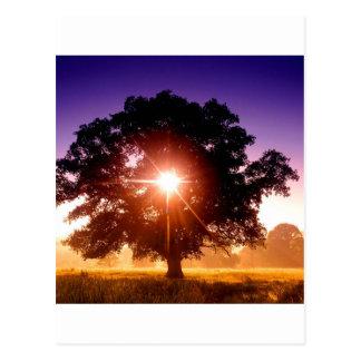 Arbre d'arbres de la vie Devon Angleterre Cartes Postales