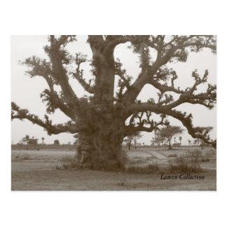 Arbre de baobab du Sénégal Cartes Postales